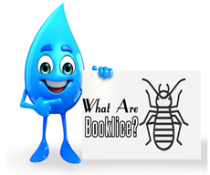 Getting to Know Booklice