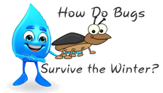 How Do Bugs Survive the Winter