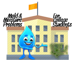 Mold and Moisture Problems for College Students