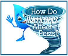 How Do Hurricanes Affect Pest?