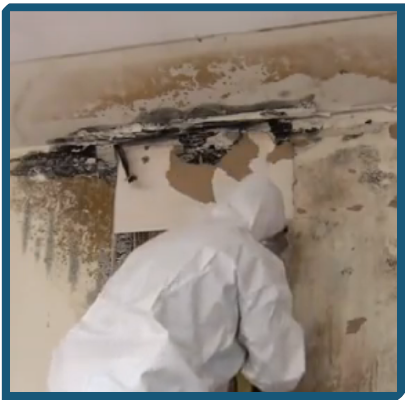 A Case Study on Mold