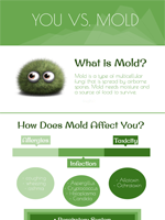 You Vs Mold
